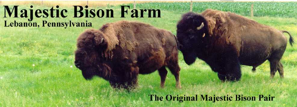 Majestic Bison Farm